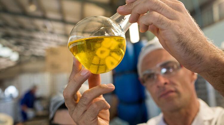 Como saber cual es el mejor aceite de oliva