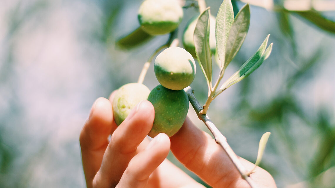 Aceite de oliva Pico-limón